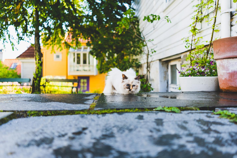 2019-09-03-09-01-46-Landscape-DSC09254